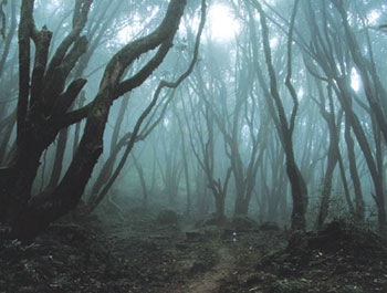 haunted-forest