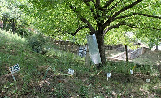 A file picture of mass graves in North Kashmir.