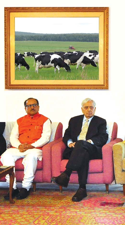 Cows,-CM-and-Dy-CM