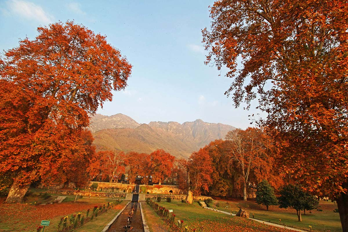 The trees dotting Mughal gardens enhance their glory, rendering the landscape as postcard-perfect.