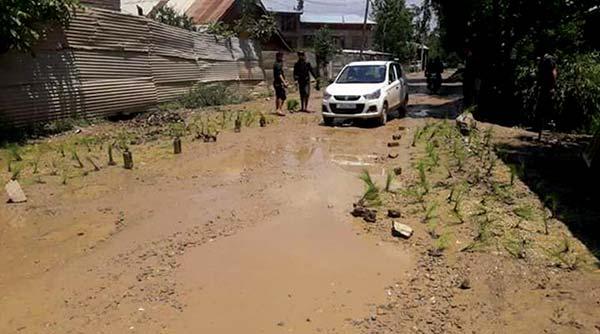 planting-paddy-on-potholed-roads