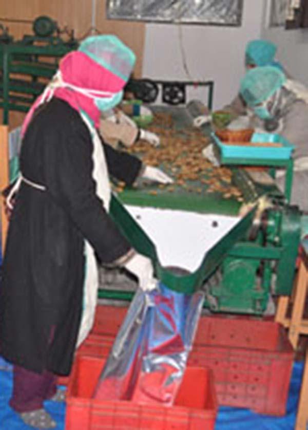 Women-at-walnut-factory