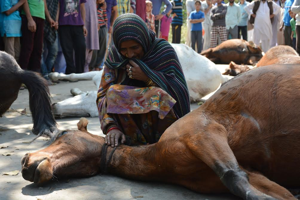 A nomad lady breaks down on the dead body of one of the horses killed by army casper in the intervening night of 24 and 25 Sep. (KL Image: Shah Hilal)