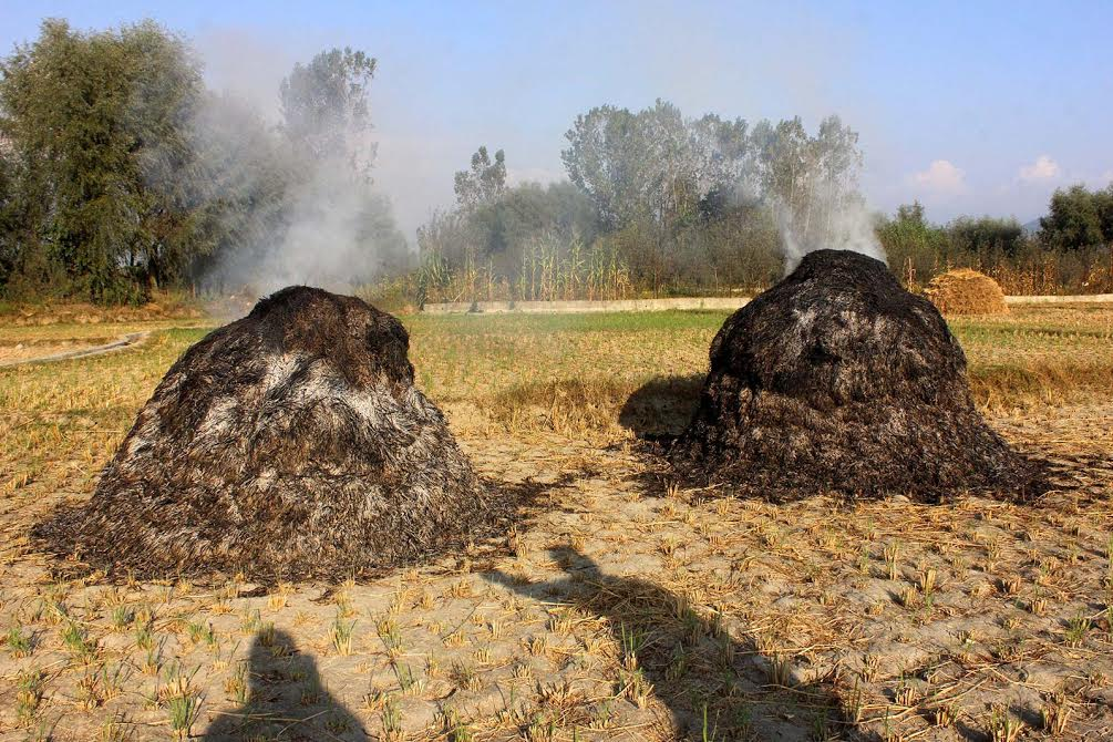 The heaps of rice and grass were burnt down in Kanelwan area of Islamabad district on September 27, 2016. The locals alleged that men in uniform lobbed tear gas shells which fell in to paddy fields destroying the rice and grass. (KL Image)