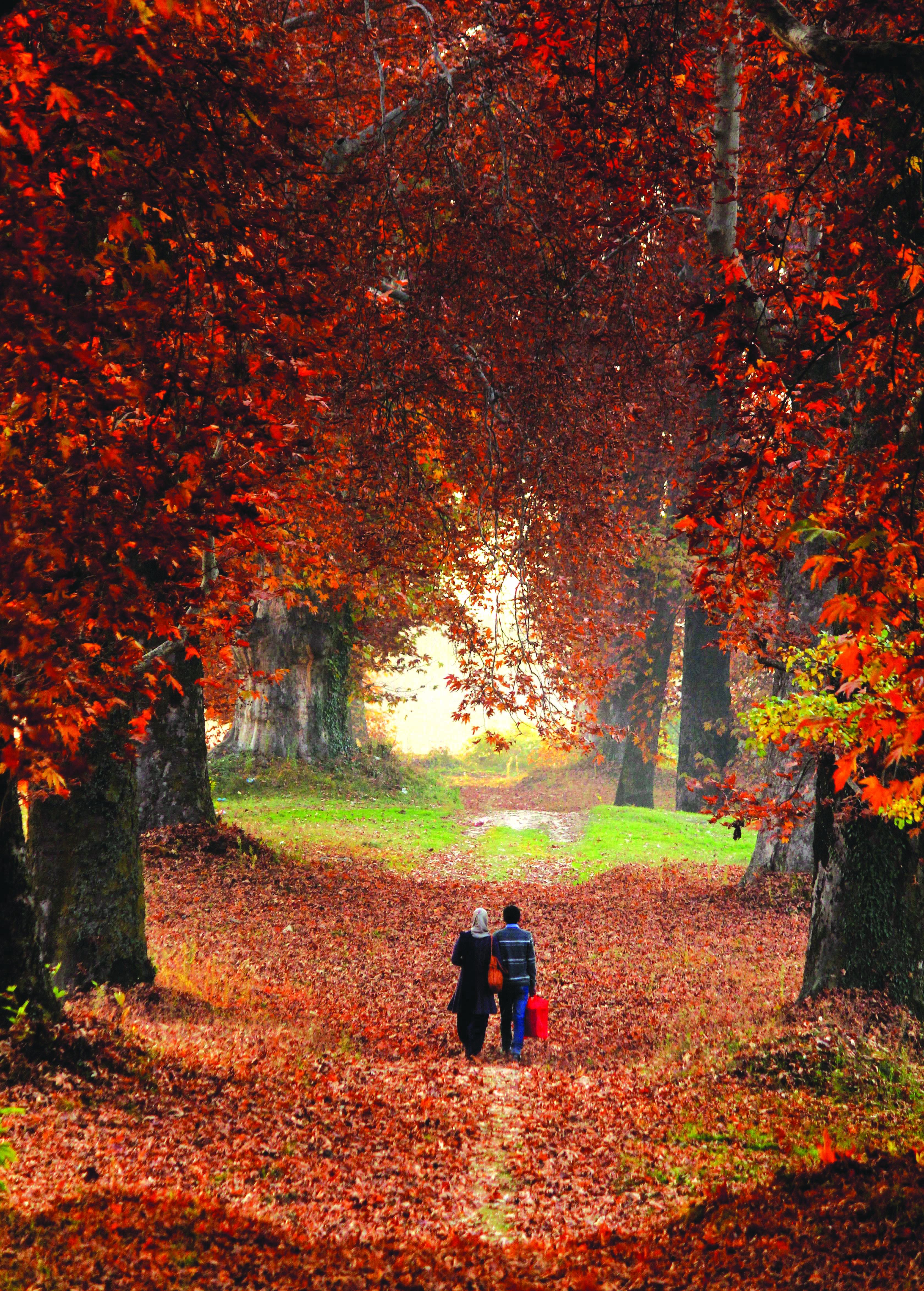 autumn in kashmir essay